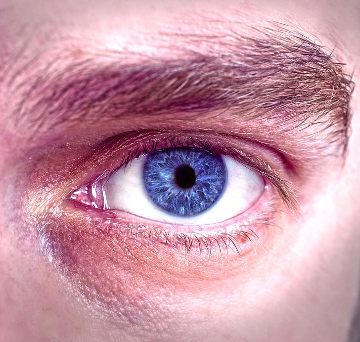 ull, blau, cara, visió de conjunt