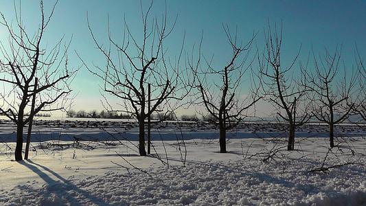 wintry, snow, winter, tree, snowy, winter magic, snow magic