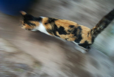 cat, speed, feline