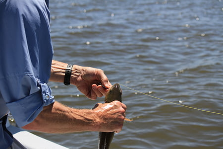 fishing, fisherman, blue sky, coastal, water, rod, male