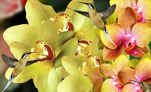 Orquideas, lilled, Aed, taim, loodus, orhideed, kevadel