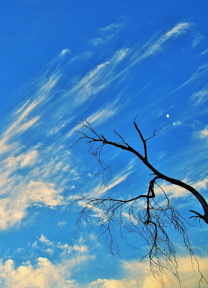 suha grana, drvo, suha, mrtvih, grane, grančice, stilski
