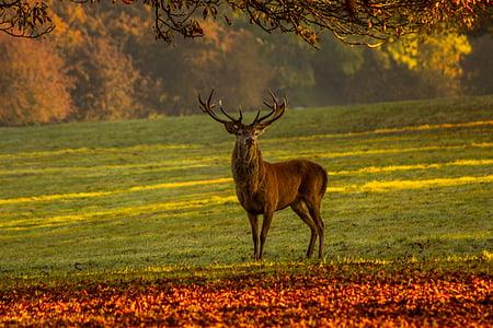 사슴, 자연, 사슴, 포유 동물, 동물 야생 동물, 야생 동물, 가지 진 뿔