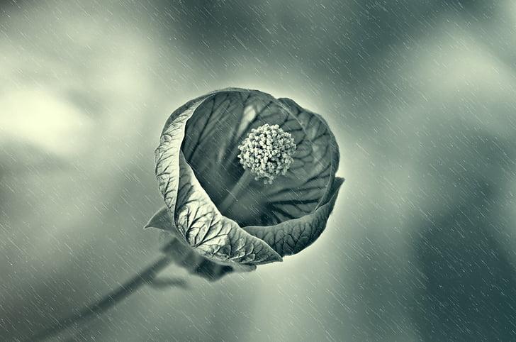 ดอกไม้, ฝน, เปียก, หยด, หยด, ฤดูใบไม้ผลิ, แสง