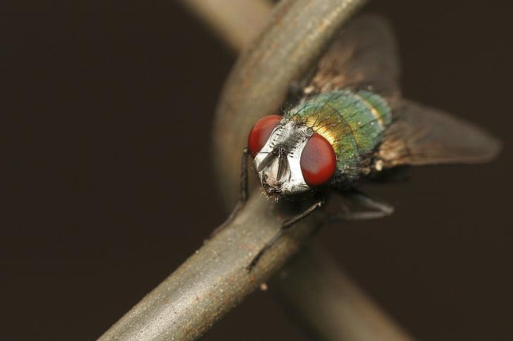 Värviline, putukate, bug, loodus, looma, Suurendus:, Makro