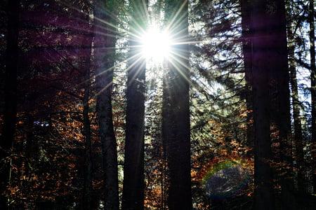 Sunbeam, llum del sol, raigs, llum, estat d'ànim, torna la llum, natura