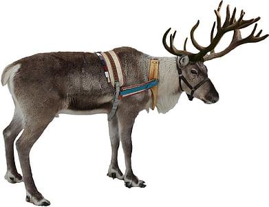 isolated, white, reindeer, winter, christmas, deer, xmas