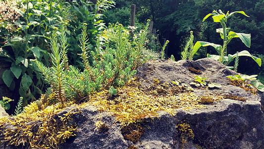 fons, natura, pedra, Microordinador, Roca, planta, a l'exterior