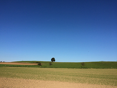 tree, field, sky, blue