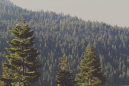 stromy, Forest, Príroda, Woods, Zelená