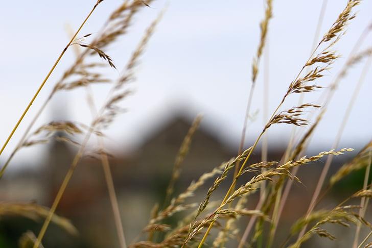 άγρια χόρτα, φύση, βότανα, άγριο φυτό, άνοιξη, Γαλλία
