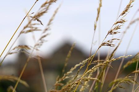 herbes salvatges, natura, herbes, planta silvestre, primavera, França