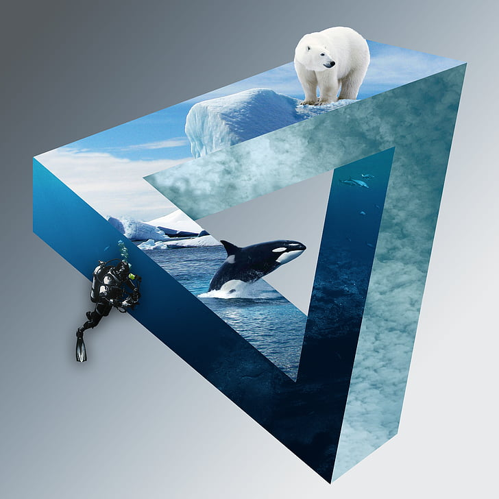 Polarni medvjed, ronioci, Wal, Orca, ledenjaci, oblaci, duboko more