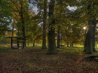 Sonbahar, herbsstimmung, Orman, yaprakları, ağaçlar, doğa, sonbahar orman