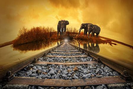 Tailàndia, elefant, posta de sol, natura, gleise, vell, ferrocarril