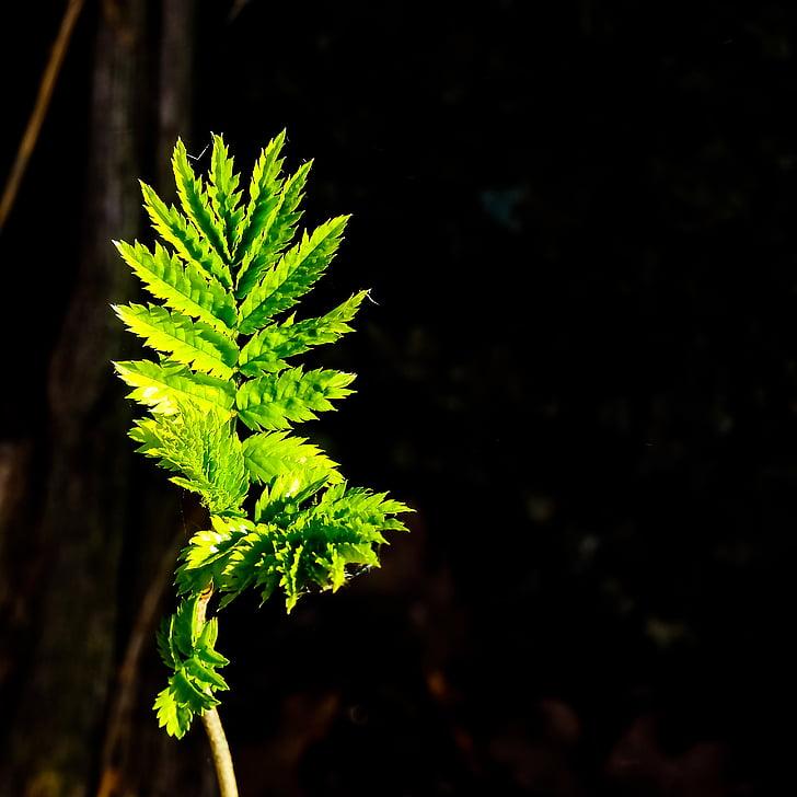 lapų, uždaryti, Gamta, žalia, augalų, miško, žalios spalvos lapų