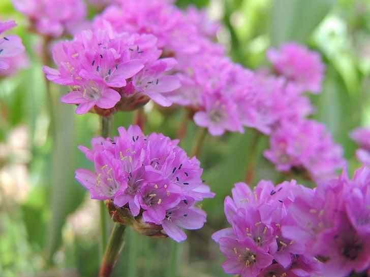 purple, flower, nature, garden