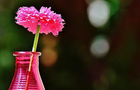 vase, glas, farverige, blomst, dekoration, dekorative glas, Deco