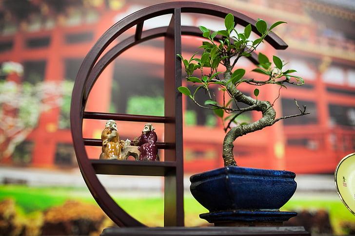 Bonsai, Japonsko, strom