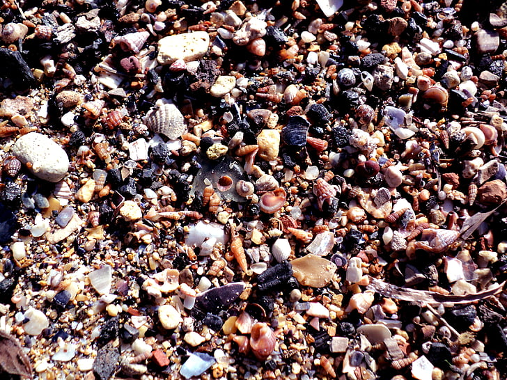 petxines, platja, sorra, Mar