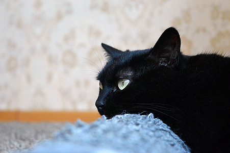 black cat, scratching posts, views, cat, cat dreams, cat is, pet