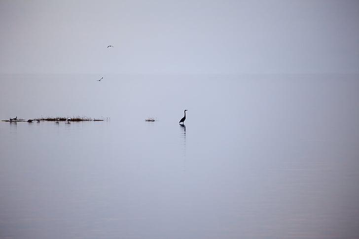 lake, silent, rest, meditation, nature, water, landscape