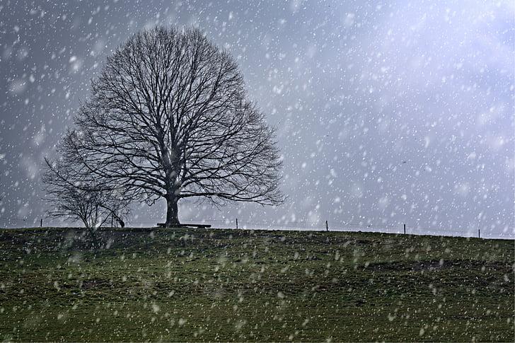 tree, individually, snow, winter, snowfall, wintry, snowy