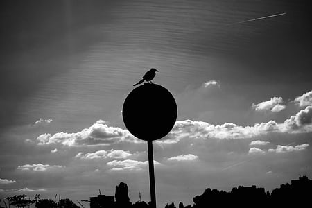 bird, animal, silhouette, bird silhouette, skyline, traffic post, bird on post
