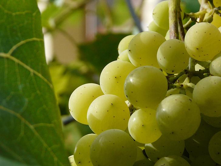 Berry, klastra, víno, Grapevine, hrozna, gule, hrozno
