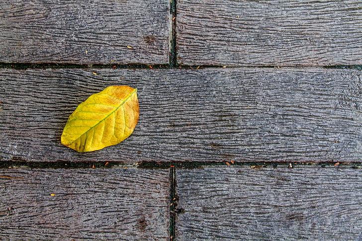 rudeniniai lapai, alopecija, žemės, geltona