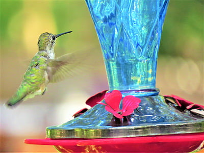 humming bird, in flight, green, blue, red, wildlife, hummingbird
