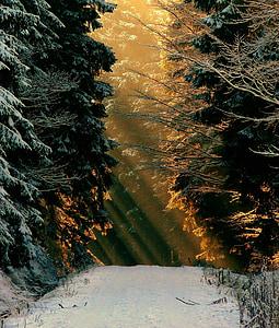 winter, snow, white, wintry, snow magic, snowy, winter magic