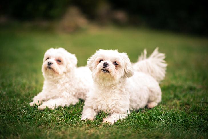 เพื่อน, สุนัข, เพื่อนรัก, เพื่อนรัก, ความจงรักภักดี, ภาพสัตว์, สัตว์เลี้ยง