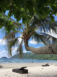 blue, sky, leaves, coconut, tree, holiday, beach
