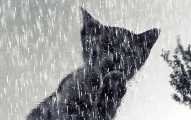 mačka, Tomcat, mačiatko, dážď, sneh, zimné, Príroda