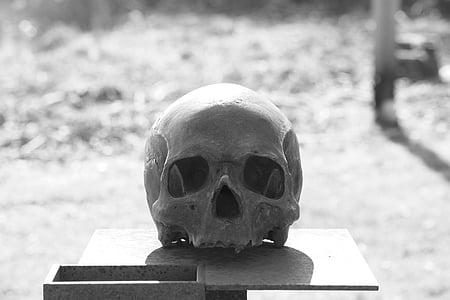 skull, head, skull and crossbones, skull bone, death, horror, weird