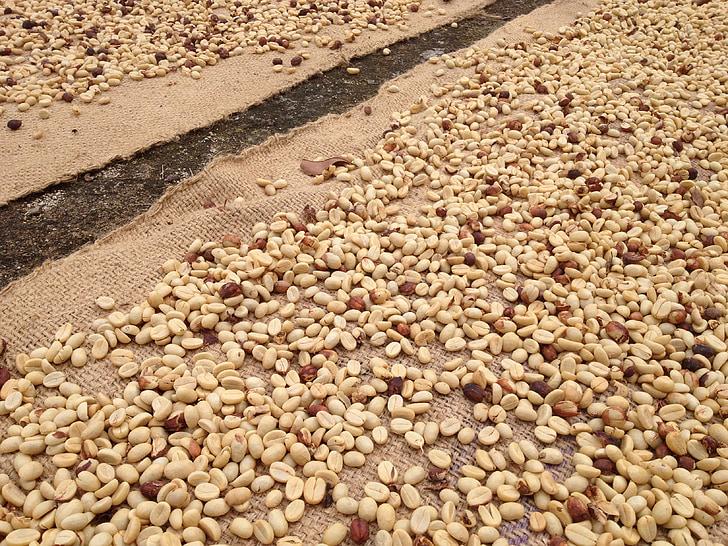 caffè crudo, chicchi di caffè, caffè di essiccazione, caffè, crudo, agricoltura, organico