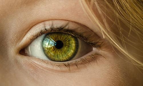 acs, zaļas acis, aizvērties, makro, meitene, jaunais, zaļa