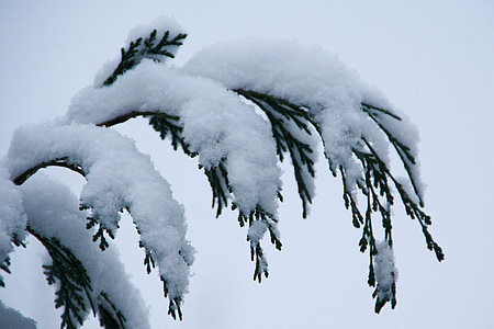 snow, winter, nature, landscape, trees, ripe