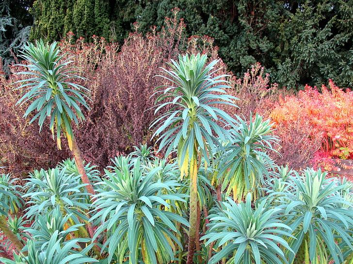 botanische tuin, plantkunde, plant, herfst, kleurrijke, natuur, Flora