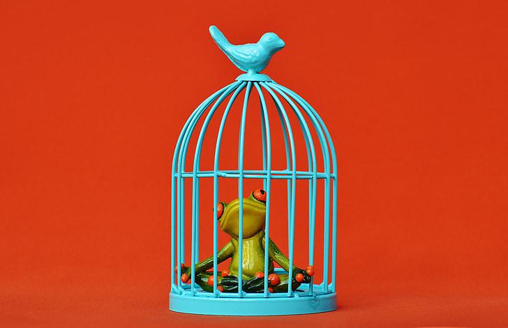 жаба, клетка, в затвора, Тъжен, фигура, Смешно, Сладък