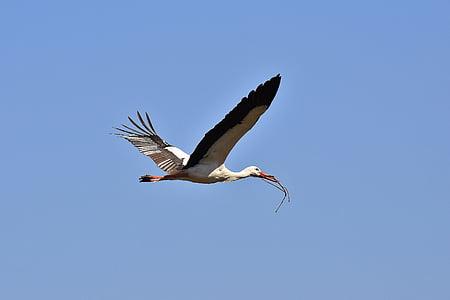 haikara, pesän rakentaminen, esteettinen, kerätä, lentää, rakentaa, Luonto
