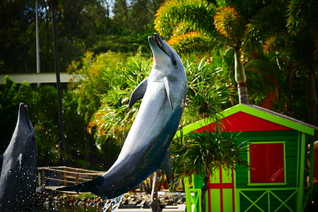 delfinov, nasmeh, skok, živali, Ocean, morje, vode