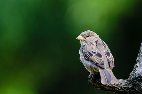 životinja, ptičje, ptica, makronaredbe, kolac, perje, jedna životinja