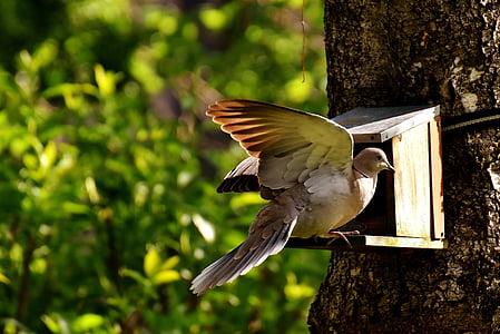 Dove, lintu, Ruoka, Linnut, sulka, eläinten, Luonto