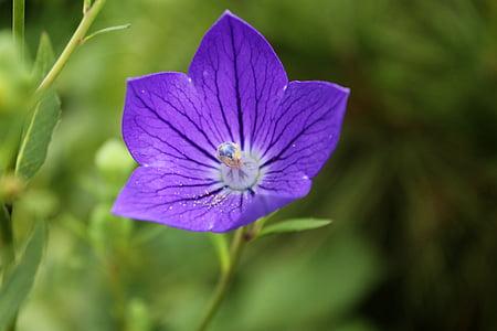 Vaata, lilled, kinnitamiseks, taimed, loodus, Makro, lilled juua