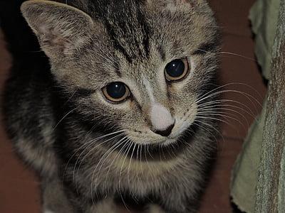 kitten, beautiful, little