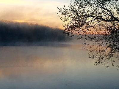 Lago, nebbia, albero, Alba, nebbia, mattina, all'aperto
