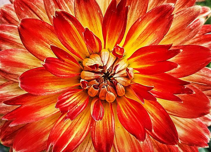Hoa, Blossom, nở hoa, Thiên nhiên, thực vật, mùa hè, đóng