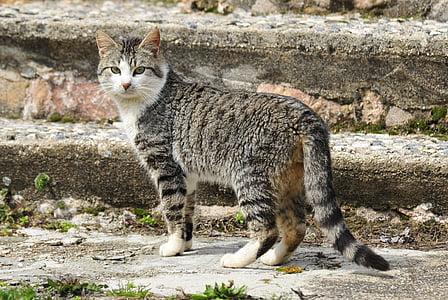 cat, animals, pet, feline, kitten, animal, pets